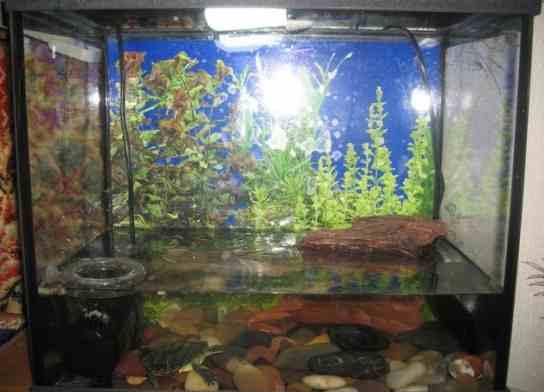 аквариум для красноухой черепахт