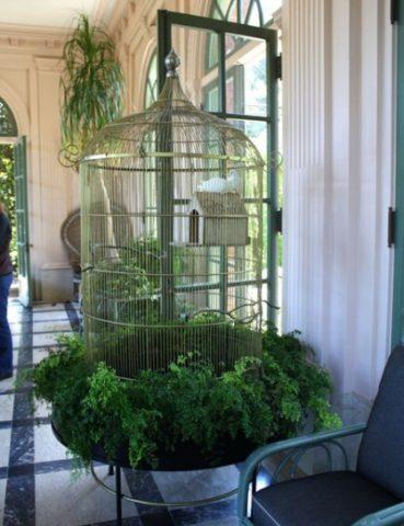 куда поставить клетку с попугаем в квартире