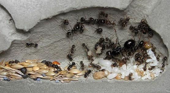 Формикарий - увлекательный мир муравьев