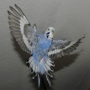 Травмы попугаев