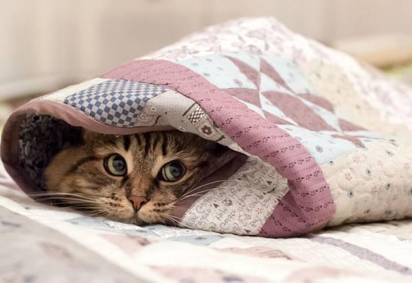 кошки-синоптики