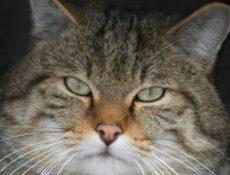 Ученые развенчали миф о кошачьем эгоизме