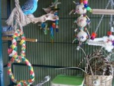 Как выбрать клетку для попугая?