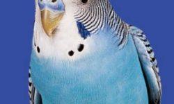 Авитаминоз у попугаев