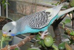 Отравление попугаев