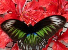 Сады бабочек