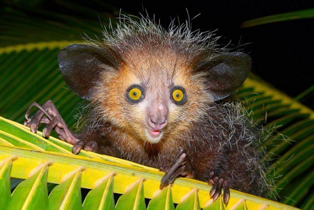 Мадага�ка��кая ��коножка �о�о о�обенно��и п�и��дливой