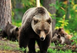 Виды медведей