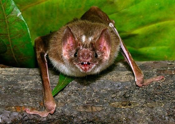 Чем питаются летучие мыши в природных условиях
