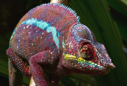 Зачем люди заводят экзотических животных?