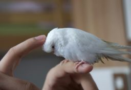Адаптация и приручение попугая