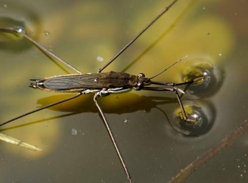 Водные насекомые и личинки
