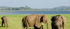 Виды слонов